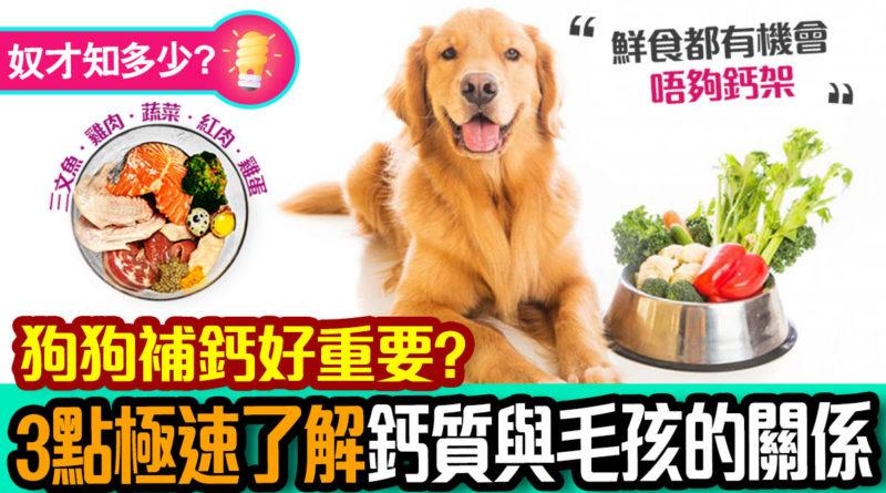 狗狗補鈣好重要?3點極速了解鈣質與毛孩的關係!