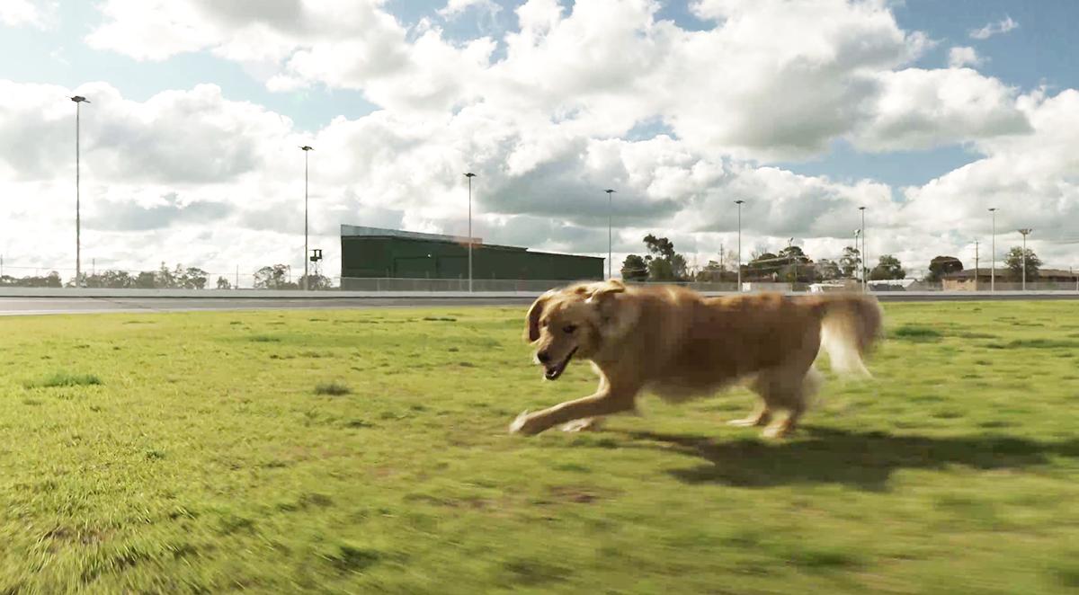 狗关节保健 / 使用关节神仙粉之后,狗狗都可以自由自在地跑跑跳跳!