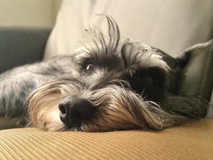 15岁老狗一直唔肯行,食咗神仙粉!而家唔再日日瞓喺度! | 狗狗健康