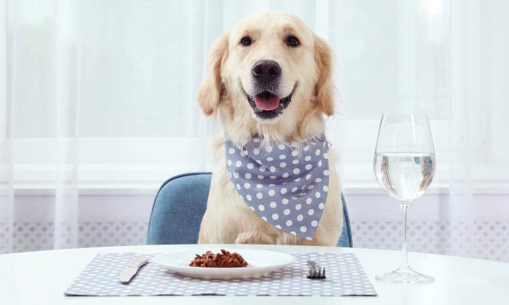 狗狗补钙好重要?3点极速了解钙质与毛孩的关系!鲜食/狗粮/猪肉/牛肉/金毛/开餐/金毛寻回犬