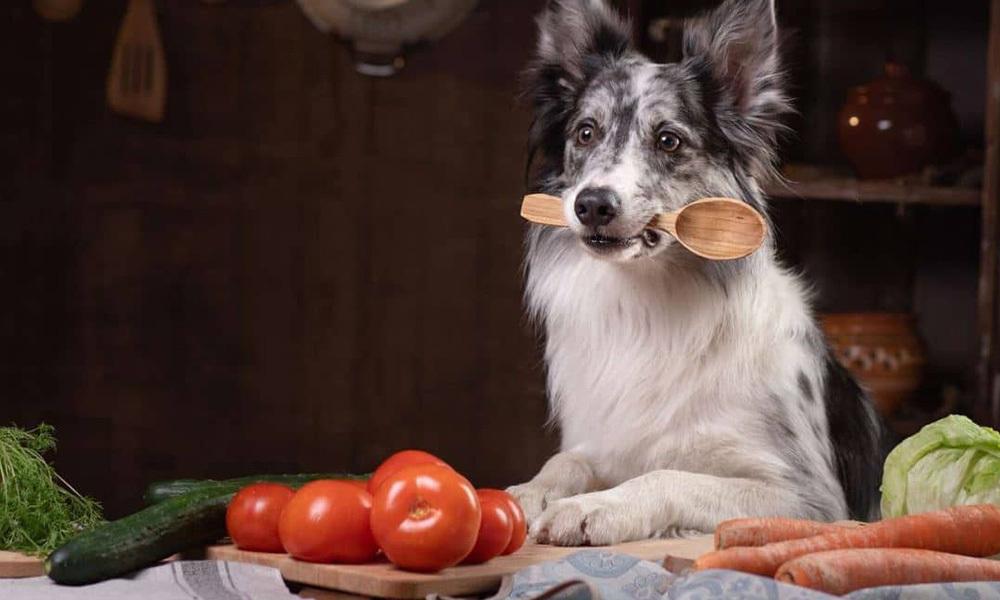 狗狗补钙好重要?3点极速了解钙质与毛孩的关系!/自己制作正餐比毛孩食的话,是需要有一定程度的宠物营养知识,所以一啲都唔简单,例如以新鲜食材为主做狗狗蛋糕,饼干或零食的。食材上有些建议给奴才们!