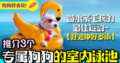 推荐3个香港室内的狗狗游泳池   狗狗好去处
