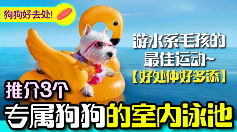 推荐3个香港室内的狗狗游泳池 | 狗狗好去处